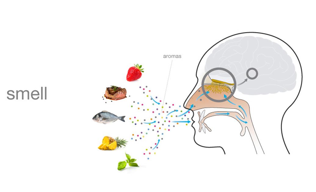 science behind smelling