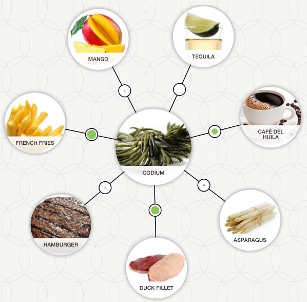 aroma wheel codium analysis foodpairing flavour combinations