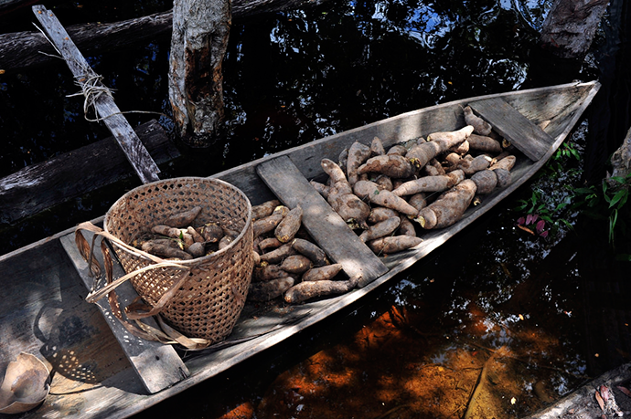 http://blog-assets.foodpairing.com/2016/06/Amazonas-Cassava-Boat-by-Neil-Palmer-CIAT.png